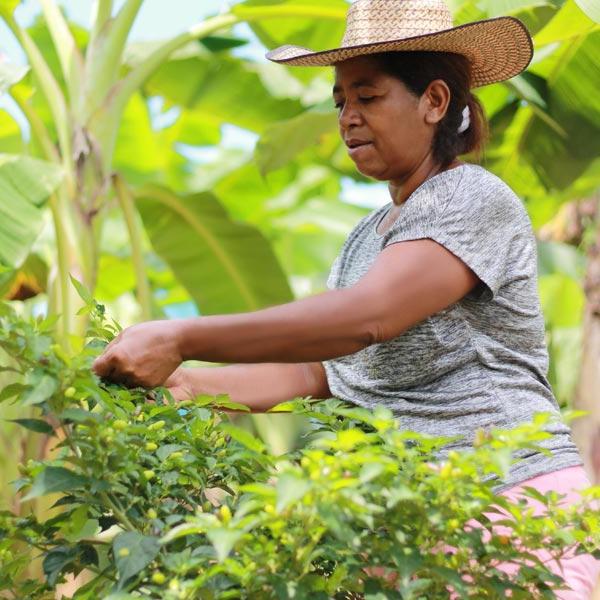 Impulso al emprendimiento rural en el Caribe